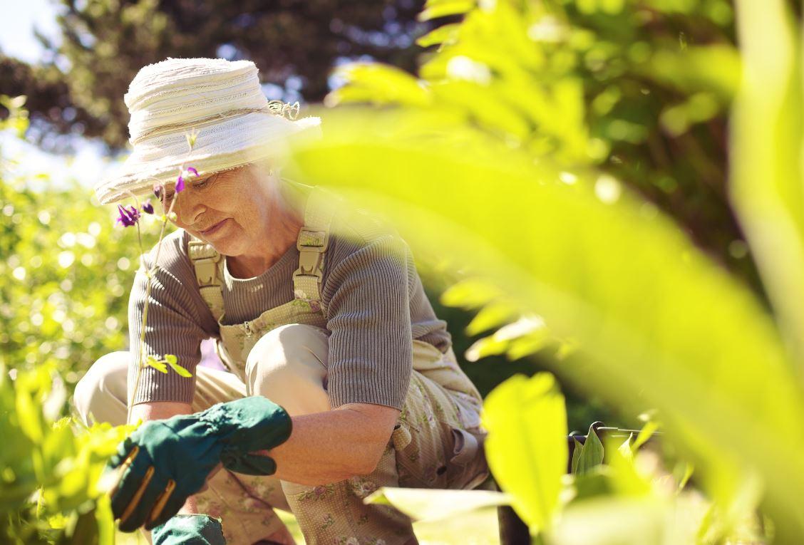 Jardin Partagé Activité Senior