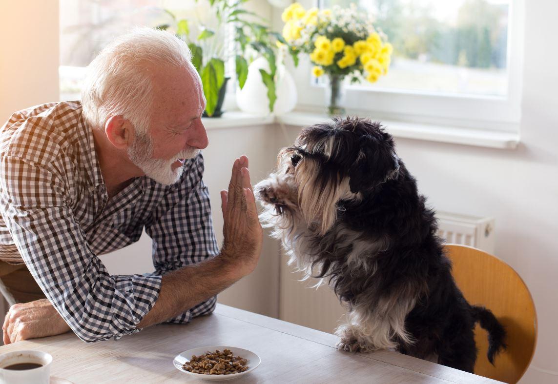 Garde Animaux Senior Petsitting