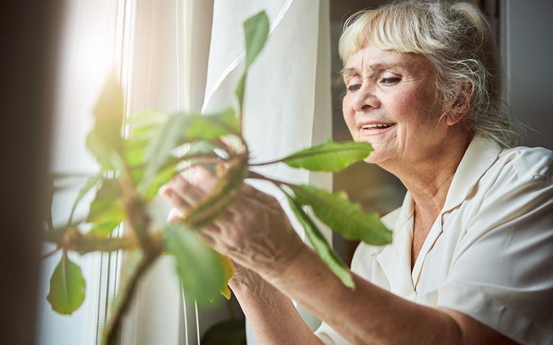 Soin Plantes Vacances