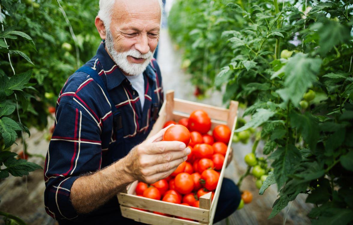 Homme Senior Avec Tomates